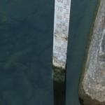 23 giugno. Il livello del lago di Bracciano è a -148 centimetri