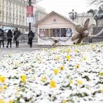 """Quello che rimane di un """"prato fiorito"""": la neve ha ricoperto la città di Torino"""