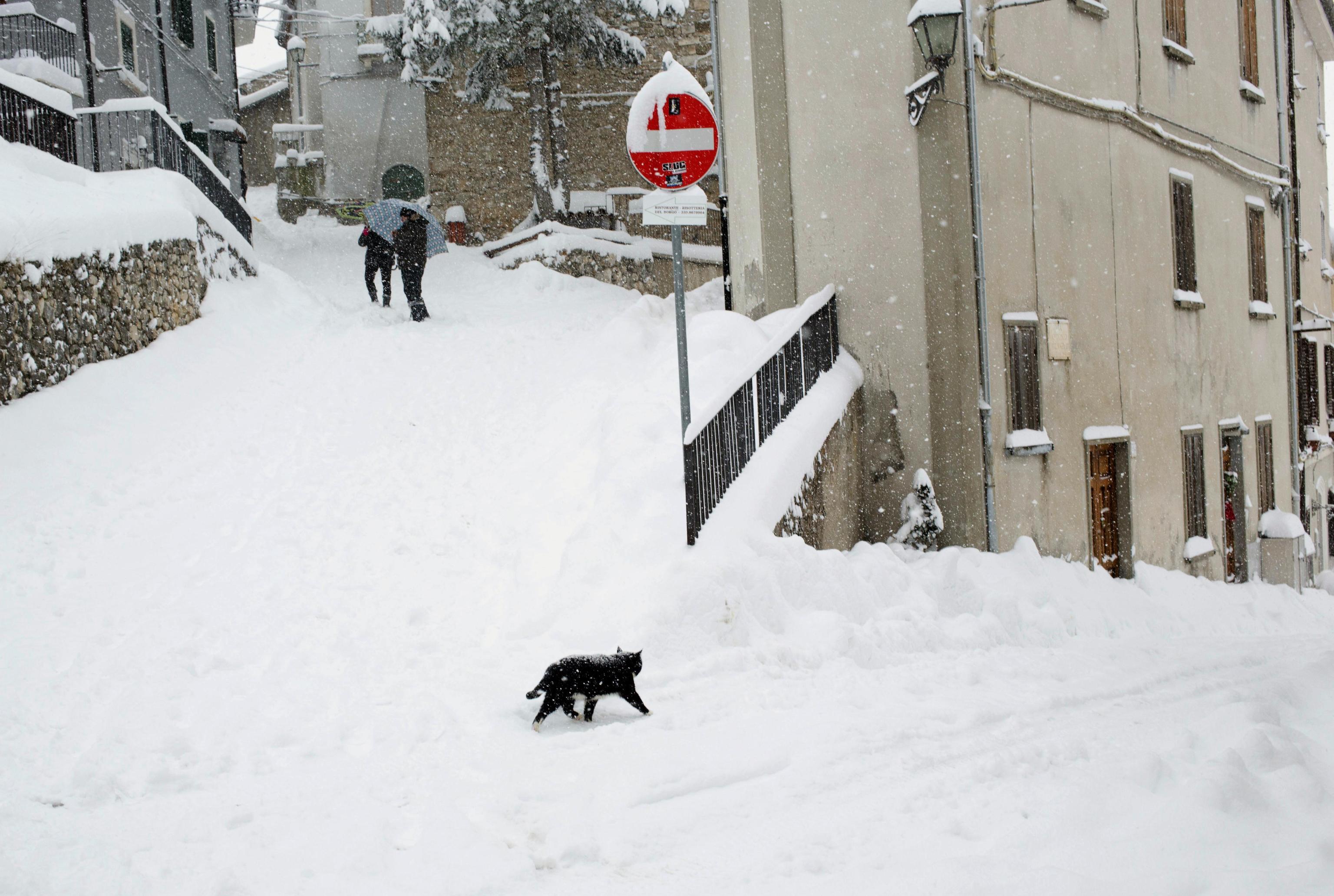 Un gatto attraversa la strada innevata a Rovere, in Abruzzo