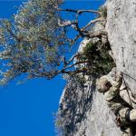 I militari procedono nell'arrampicata