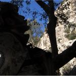 Un militare raggiunge i rami di un albero