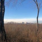 La vista di Milano dal Boschetto