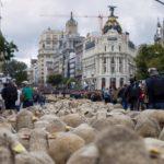 Una legge medioevale consentiva ai pastori di attraversare i centri abitati