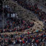 Dal 1994, ogni anno le pecore percorrono le strade di Madrid in occasione del Festival
