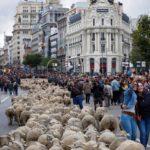 La capitale spagnola è una tappa di un antico percorso di spostamento delle greggi