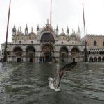 Un gabbiano atterra sull'acqua alta a piazza San Marco